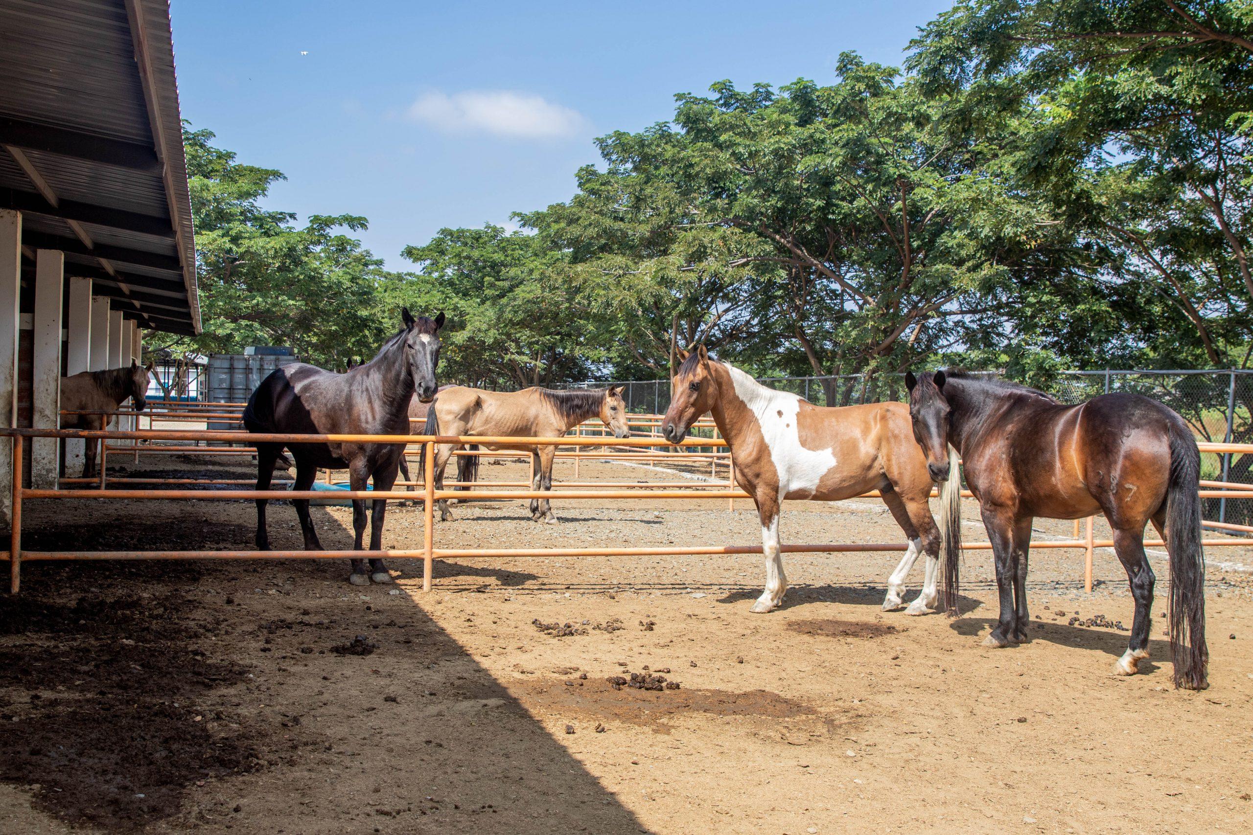 Prefectura del Guayas trabaja en la readecuación, mejoras y ampliación del Centro Integral de Terapias